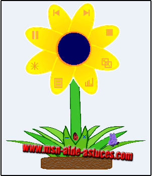 Theme Spring Flower Springflower